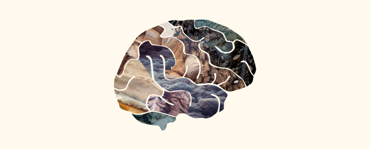 brain 1@2x.png